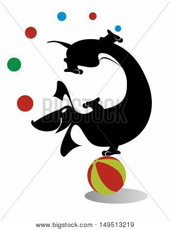 Silhouette of the dachshund. Comic dachshund on the ball juggling balls