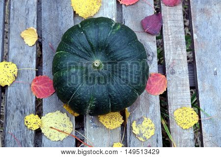 Autumn still-life big green pumpkin and colorful fall leaves around on old wooden table top view closeup