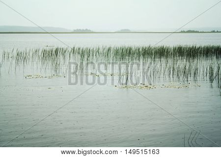 Cloudy landscape of the lake with Water Sedge. Toned photo. Peaceful summer evening at Kenozero lake. Russian north. Kenozersky National Park (UNESCO Biosphere Reserve).