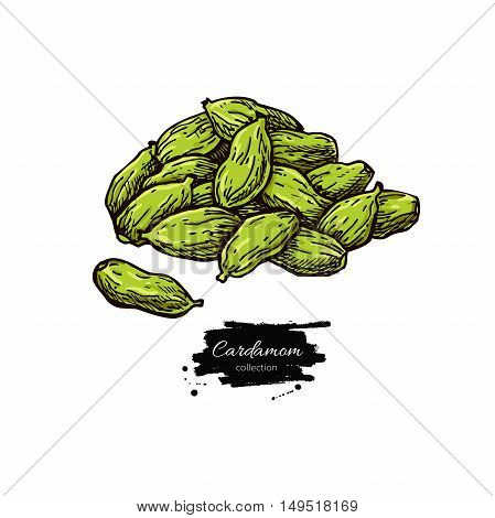 Cardamom seed heap vector hand drawn illustration. Isolated spice object. Engraved style seasoning. Detailed organic product sketch. Cooking flavor ingredient. Great for label, sign, icon