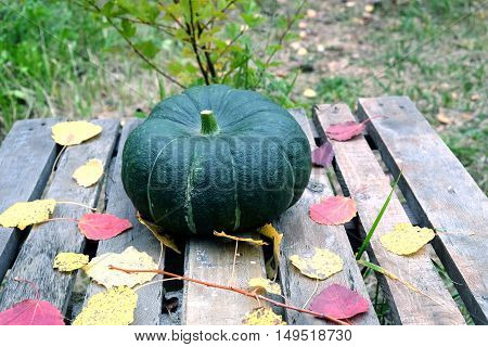 Autumn still-life big green pumpkin and colorful fall leaves around on old wooden table front view closeup