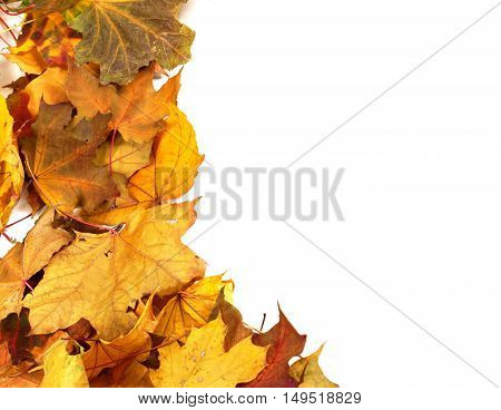 Autumn Dry Maple-leafs Background