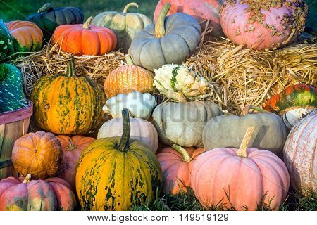 Colorful pumpkins and gourds on a haystack at a roadside market in New Jersey.