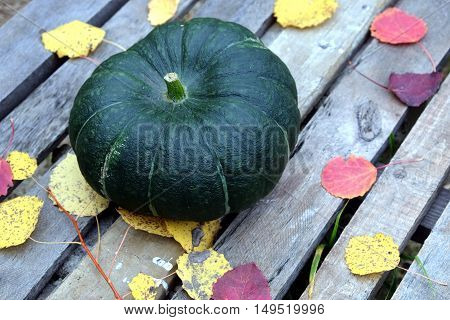 Autumn still-life big green pumpkin and colorful fall leaves around on old wooden table side view closeup