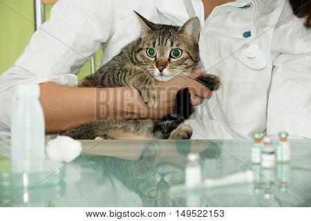 Frightened Cat At Veterinary Clinic