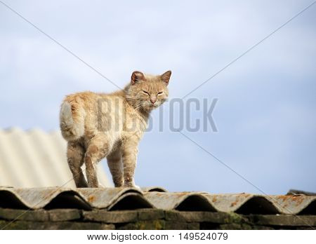Cat walking on a fence