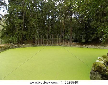 Green water in small lake, green lake in park