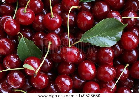 fresh cherries as a background in the closeup