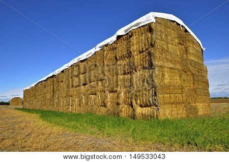Huge stack of rectangular straw bales with a plastic cover on top located in a field