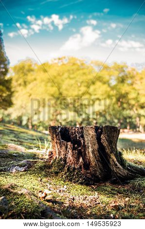 Shallow tree stump against a vibrant tree lined background and cloudy blue sky.