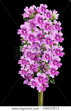 bouquet of purple wild flowers, with black background