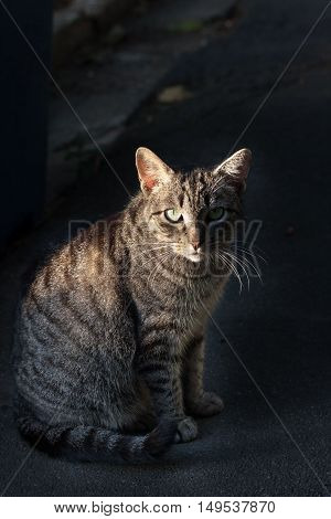 Alley cat looking hypnotic in the dark