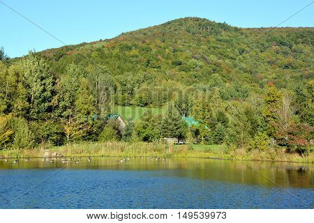 Early fall landscape canadians geese in lake eastern township Bromont, Quebec, canada