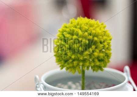 Green lime spiked round shaped cactus in white pot
