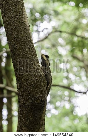 Brown lizard standing on a tree in the forest.