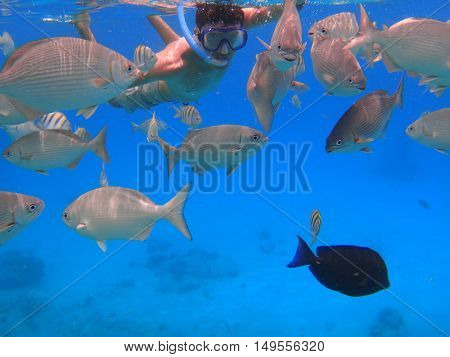 Man with black hair has been snorkeling on the island of San Andres in the Caribbean sea. He feeds the fish under water in clear blue sea.