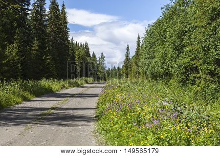 Country road, surrounded by flowers and trees. Shadows and summer day.
