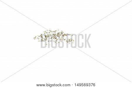 Dead of mosquitoes isolated on white background