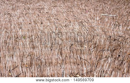 Thatch roof background pattern make with dry grass or hay