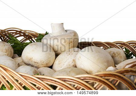edible raw mushrooms on a wooden table