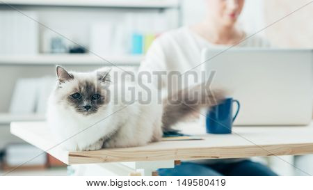 Lovely Cat Posing On A Desk