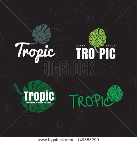 Vector logo set with Monstera leaves. The tropical plants leaves as main element of logotypes