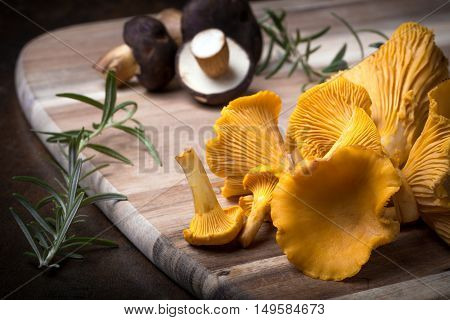 Rosemary With Cantharellus. Yellow Chanterelle And Boletus