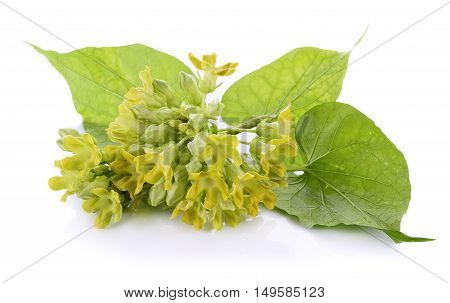 Closeup Cowslip creeper on white background. food