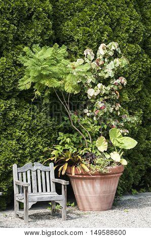 Wooden vintage chair and big flower pot in garden courtyard