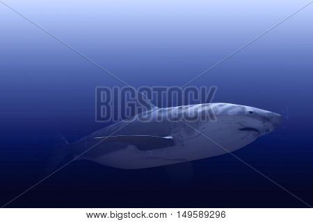 3d illustration of the white shark swimming into the depth