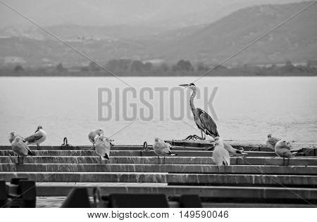 Flock of birds standing on the platform beside the lake