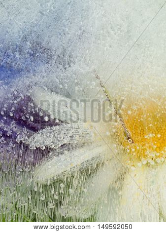 beautiful white-yellow abstraction with organic chamomile delicate flower frozen in clear clean water with air bubbles
