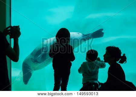 BIARRITZ, FRANCE - JUNE 27, 2016: Visitors observing as the grey seal (Halichoerus grypus), also known as the Atlantic seal swims in the Biarritz Aquarium in Biarritz, France.