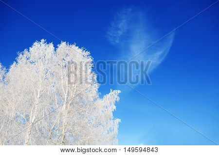 Landscape Photo Of A Trees Covered In Fresh Snow. Christmas.