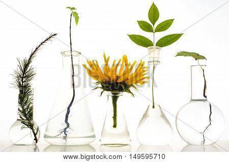 Five Laboratory Flasks With Plants On White Background