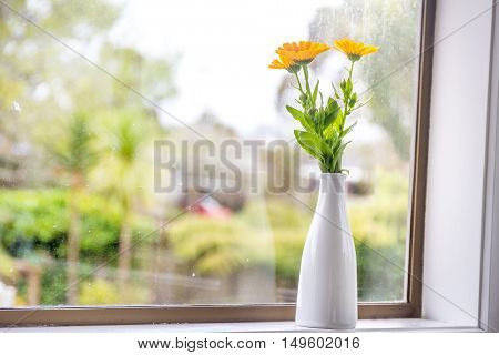 beautiful fresh flowers near window on rainy day view background
