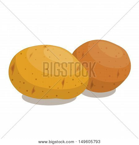 Two potato close up isolated on white background. Vector illustration.