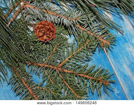 branches of spruce, pine and fir cone lying on blue wooden boards