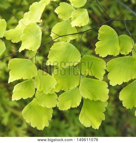 Leaf Fern Plant With Sunlight