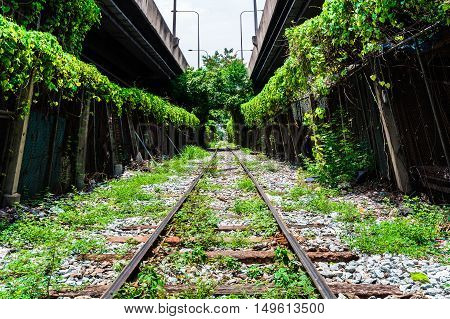 tree tunnel railway in city for background