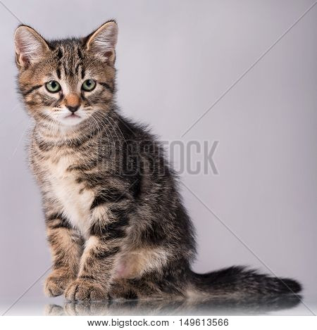 Cute little kitten with sad eyes over grey background