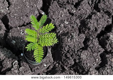 Green plant growing through cracked dead soil