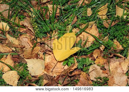 yellow autumn leaves on the ground in the park