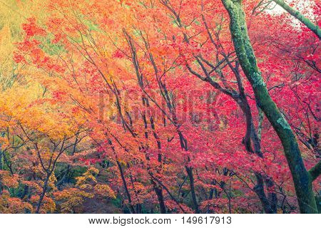 Beautiful Colorful Autumn Leaves ( Filtered image processed vintage effect. )