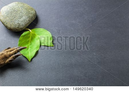 Green Leaf With Stones And Paw Wild Animals On Black Background
