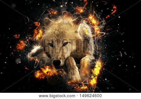 Arctic white wolf danger beast, fire illustration.