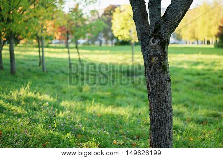 tree trunk in front of defocused autumn background, copy space