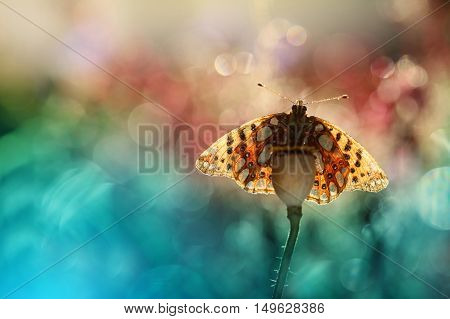 The colorful world of a butterfly on a nice background