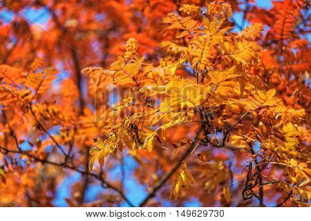 Blue sky among yellow and red treetops in an autumn park
