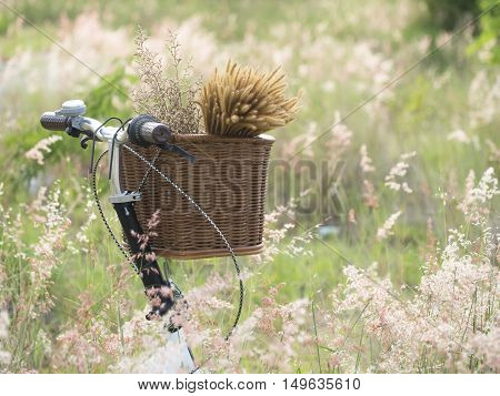 Bicycle with basket of flowers in meadow select and soft focus